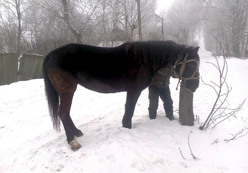Продати коня зловмиснику завадили місцеві жителі