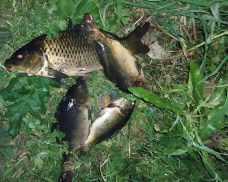 Подекуди рибу ловлять електровудками