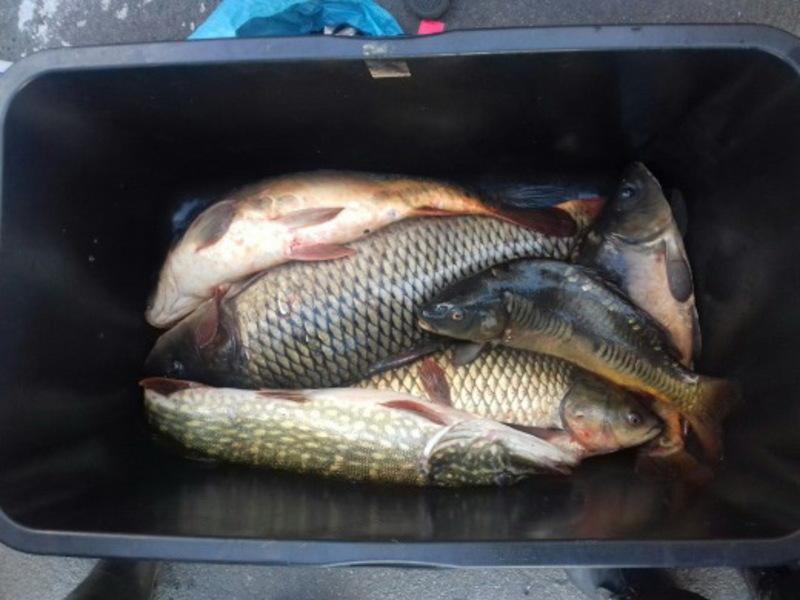 На ринках Красилова та Старокостянтинова задокументували два факти незаконного продажу риби
