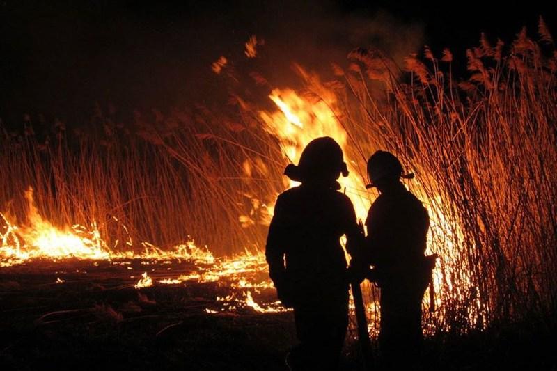 Рятувальникам через пожежі сухостоїв довелося більше 50 разів виїжджати на виклики