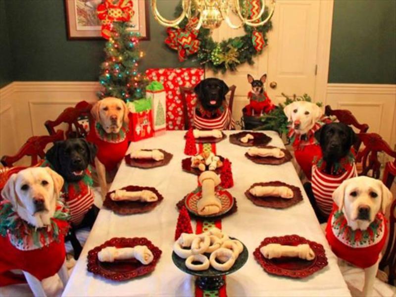 Жовтий Земляний Собака — любить веселощі та смачну їжу. Тому новорічний стіл обов'язково накривайте з урахуванням вподобань господаря року. Насамперед, він хижак, тому зробіть акцент на м'ясних стравах.