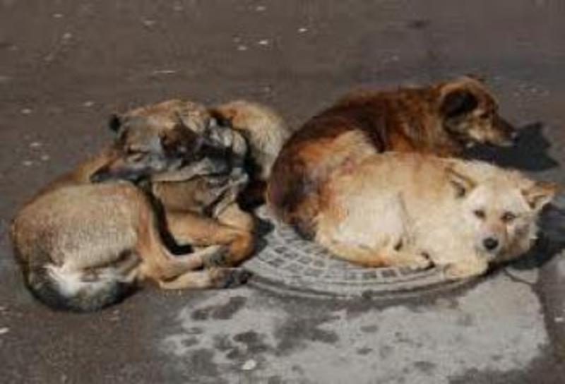 Славутчани страждають від надмірної кількості безпритульних тварин