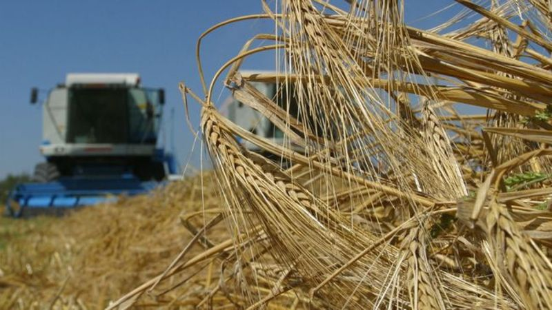 Аграрії заплатили у десять разів більше податку ніж минулого року
