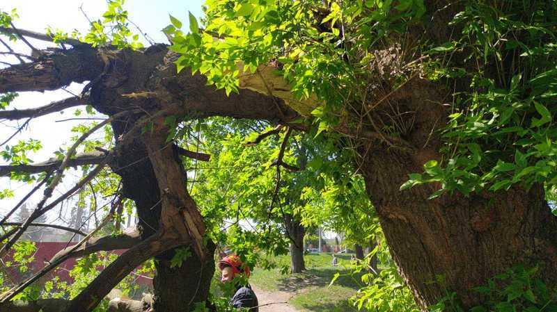 Сильний вітер валить дерева