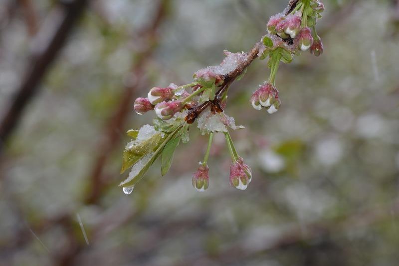 Суттєве похолодання відбудеться майже на усій території України