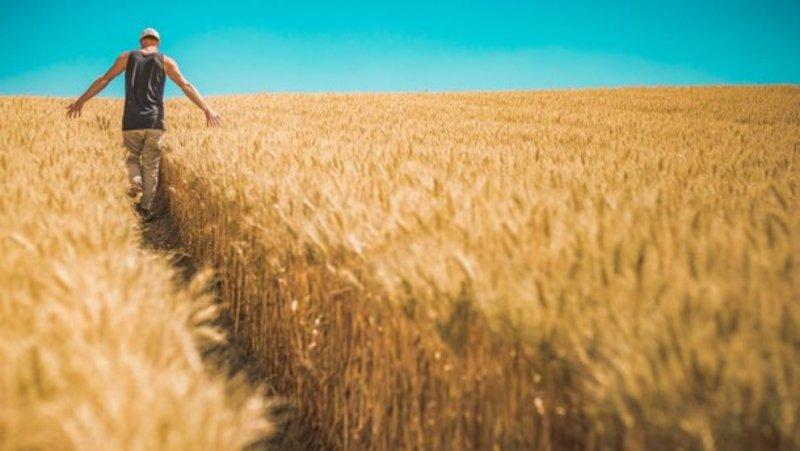 Проєкт закону передбачає з 1 жовтня 2020 скасування заборони на продаж землі