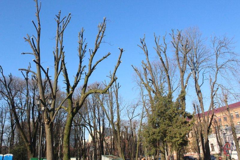 Одне з останніх омолоджень дерев цього сезону провели в парку Шевченка