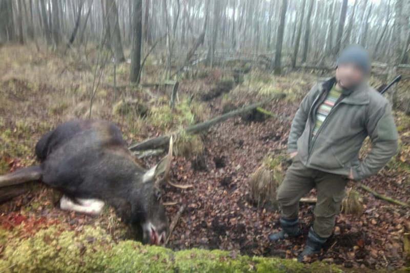 У лісі на Хмельниччині вбили червонокнижного лося