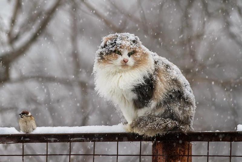Мокрий сніг з дощем обіцяють сьогодні синоптики