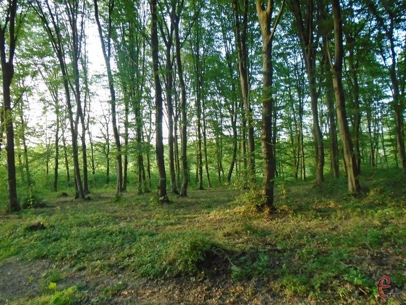 Ліс повернули у власність держави
