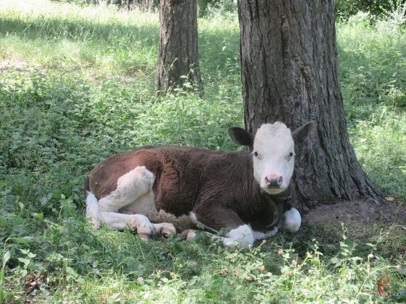 Для уникнення непорозумінь важливо вчасно подавати дані для реєстрації тварин у визначені законодавством строки.