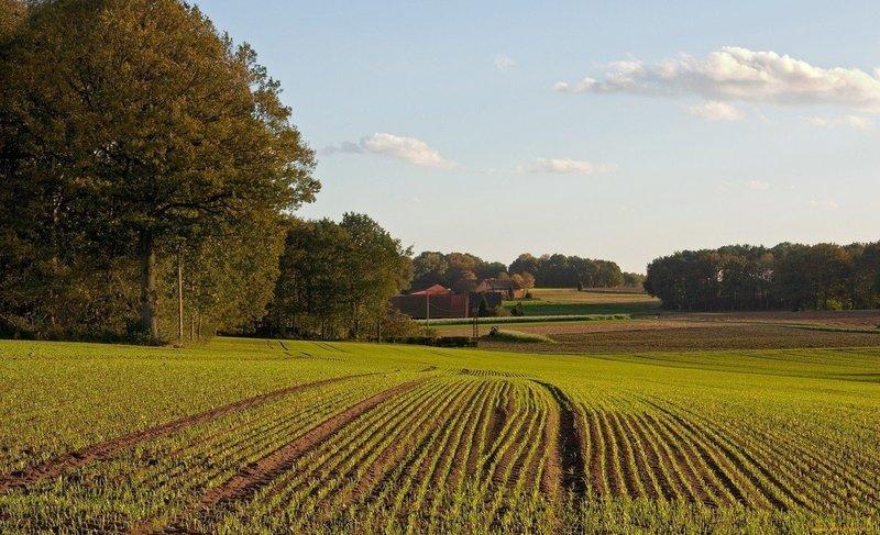 Земельну ділянку було передано в оренду без проведення торгів та без розробки технічної документації