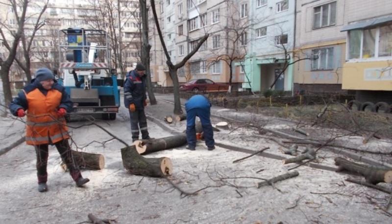 На Тернопільській омолоджуватимуть дерева