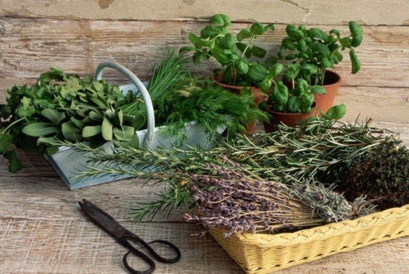 Споживання різних трав називають мудрою «трав'яною» кулінарією.