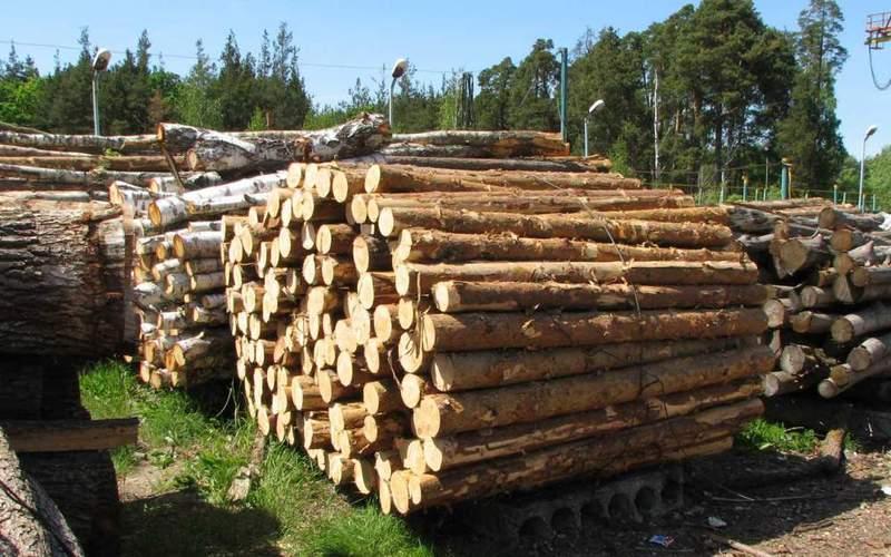 Директор підприємства продав ліс, а гроші привласнив