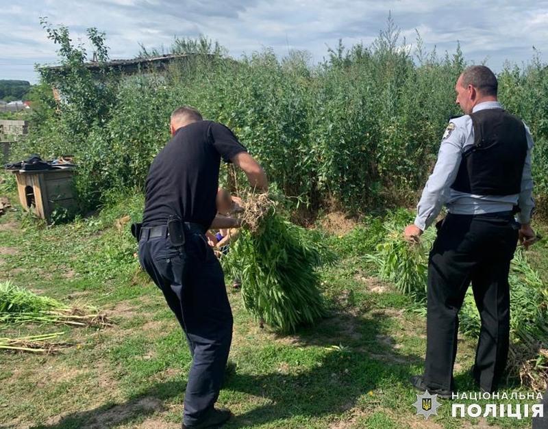 На Хмельниччині поліцейські виявили у 42-річного чоловіка 176 кущів конопель