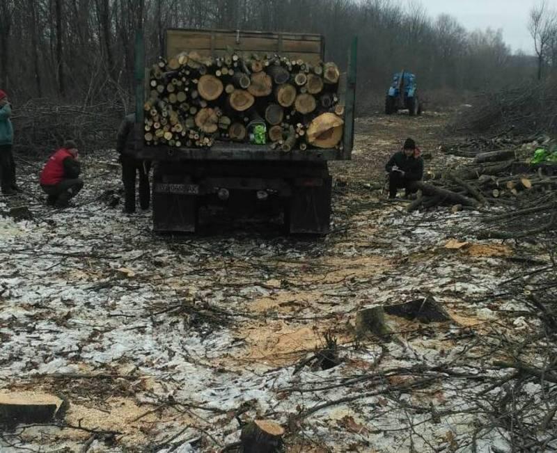 Виявлено незаконну рубку дерев на суму понад 800 тисяч гривень