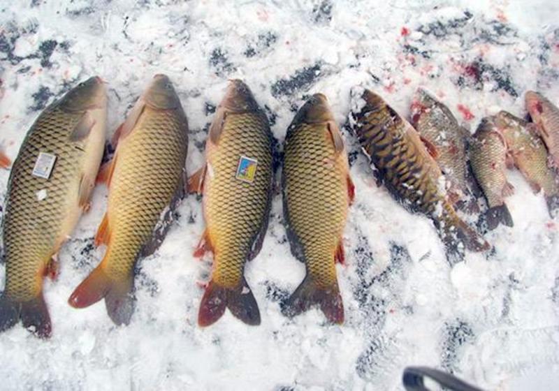 На Хмельниччині двоє зловмисників намагалися викрасти із приватного ставка риби на 5 тисяч гривень