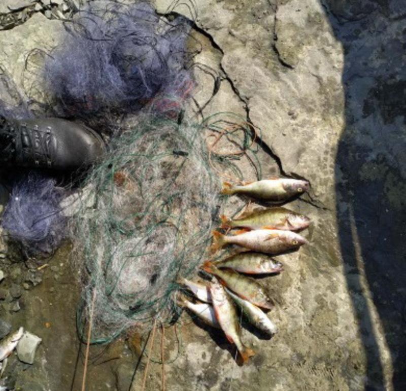 З початку місяця у порушників вилучили 14 кілограмів риби та раків