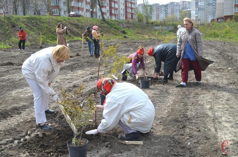 Екологи вважають, що найкраще для масової висадки у Хмельницькому підходять липа дрібнолиста, клен та дуб