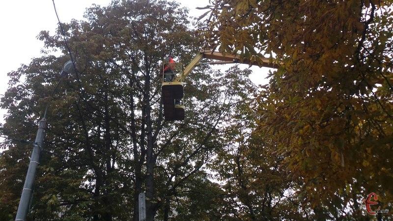 Знову в місті омолоджуватимуть дерева