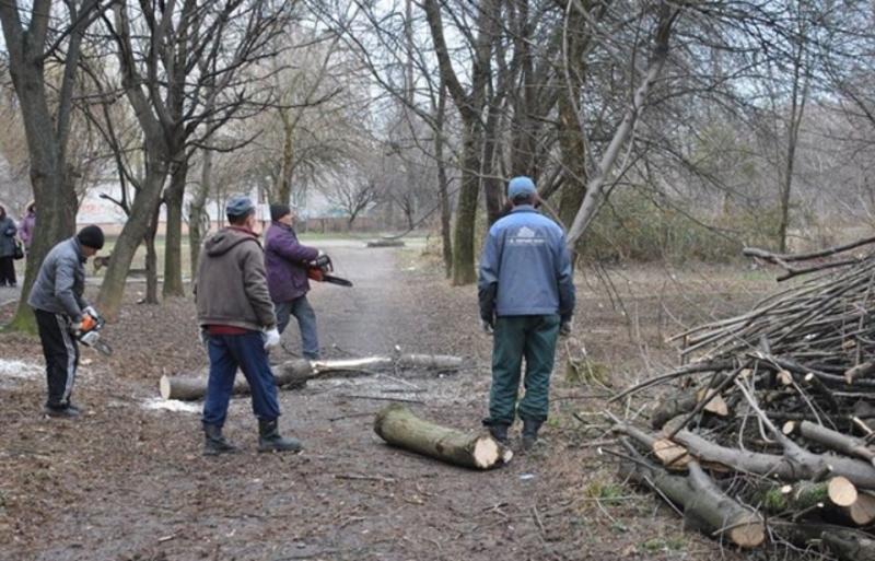 Омолоджуватимуть дерева на вулиці Заводській