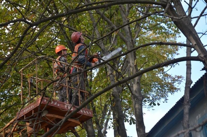 Комунальники виконуватимуть роботи зі знесення аварійних дерев