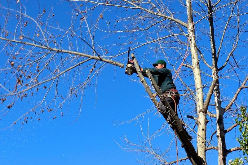 На Молодіжній обрізатимуть дерева
