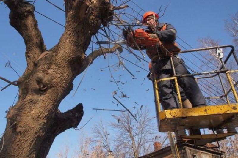 У зв'язку із обрізкою дерев буде перекрито рух транспорту вулицею Грушевського