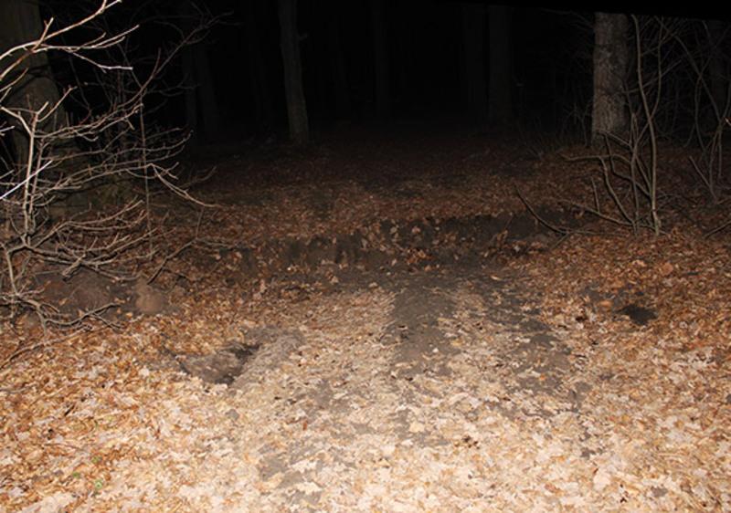 Іноземця лишили в лісі напризволяще