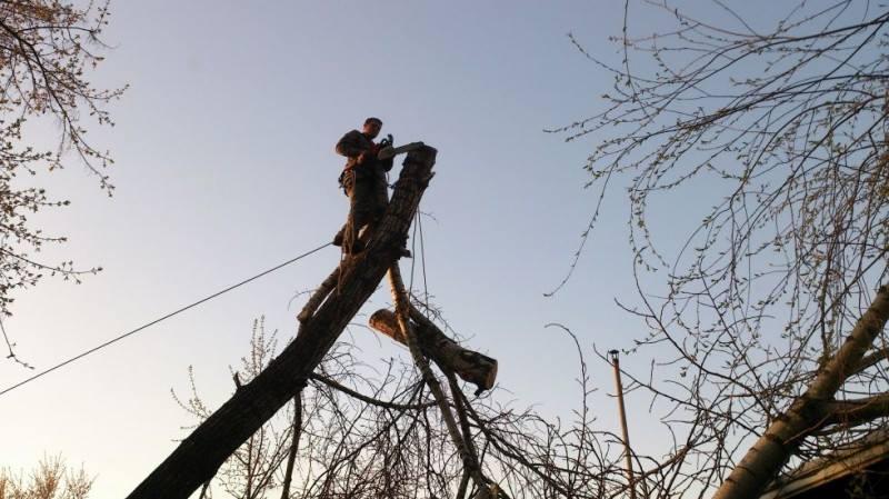 Комунальники зрізатимуть аварійні дерева