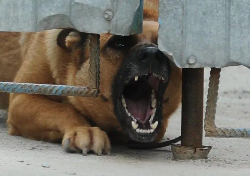 Карантин: В Снятинському районі у собаки виявили сказ