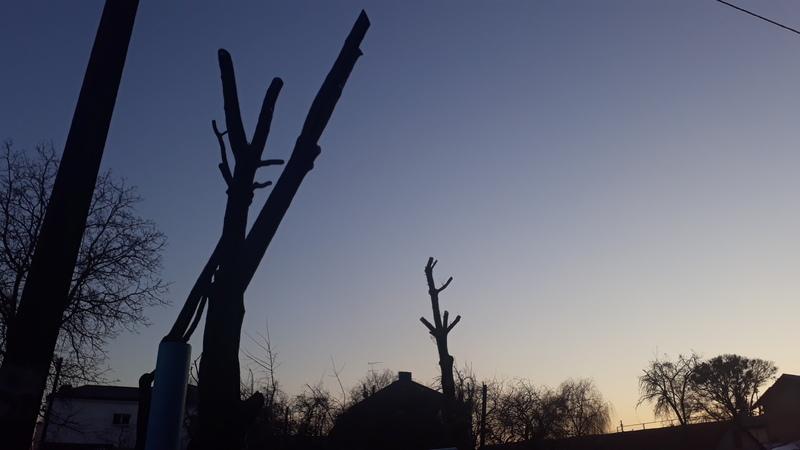 У Хмельницькому два дні омолоджуватимуть дерева у Гречанах