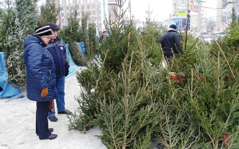 Продає новорічних деревцят стартує 18 грудня