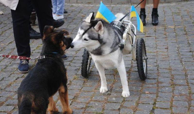 Марш за права тварин відбудеться 30 вересня