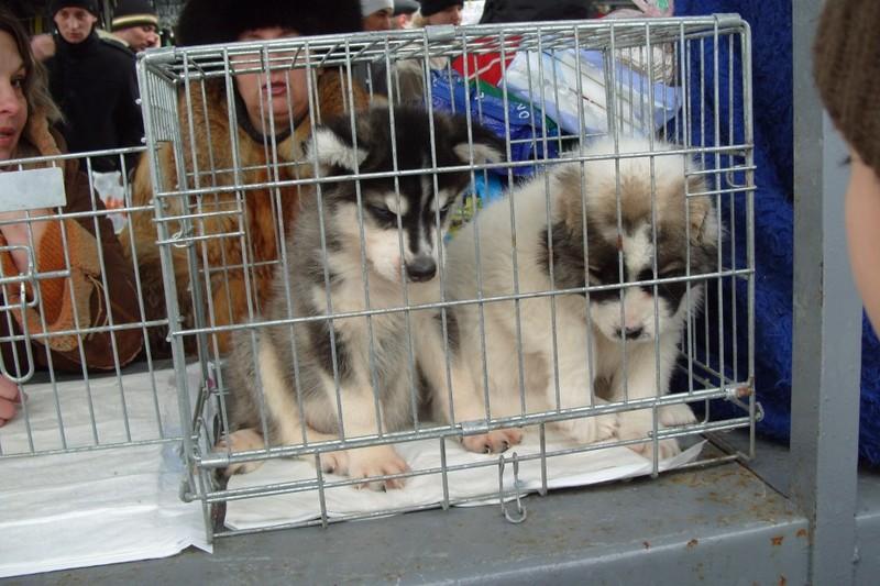 Хмельничани думали, що продають тварин, а самі потрапляли на гачок до шахраїв