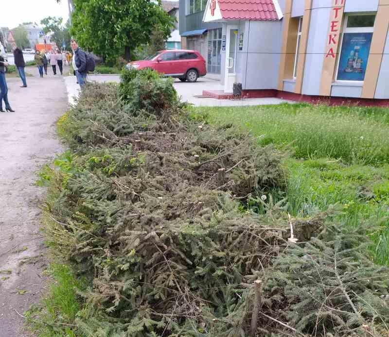 29 ялин зрізали, залишили стовбурі до пів метра.