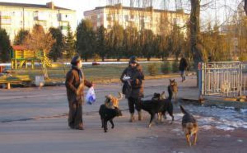 Нетішинцям заборонили годувати собак в людних місцях