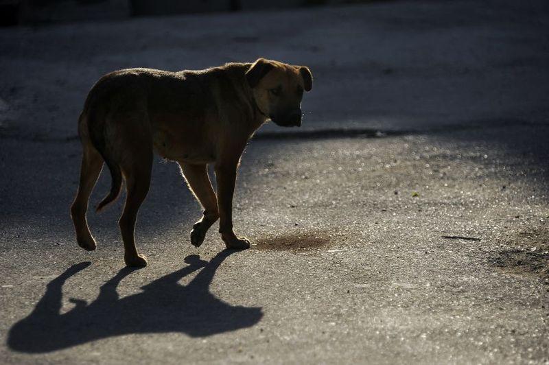 У Нетішині пропонують винагороду за інформацію про тих, хто труїть собак