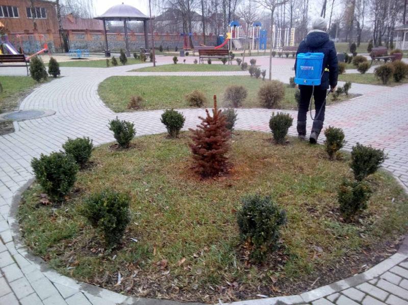 Жителів громади у Полонному попереджають про незвичну обробку ялинок