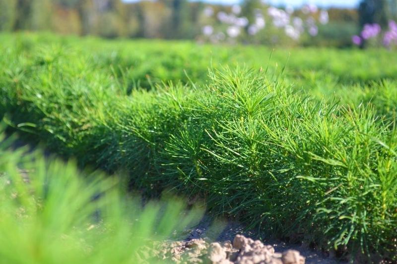 Комплекс зможе забезпечи всю область садивним матеріалом