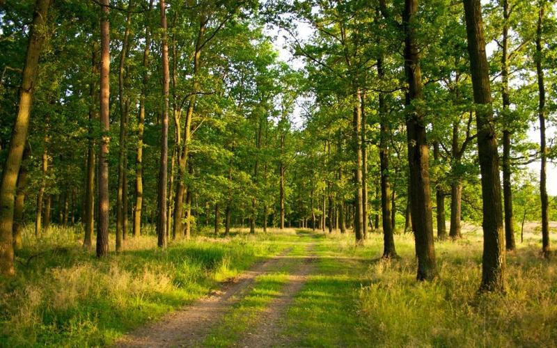 Завдяки втручанню прокуратури державі повернуто 2 га лісу в Славутському районі