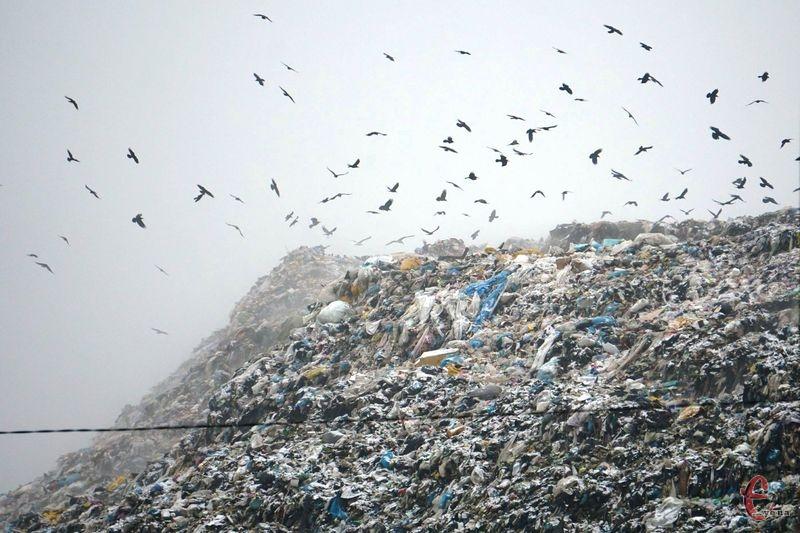 За версією екоінспекції, фільтрат із сміттєзвалища потрапляє у навколишні води