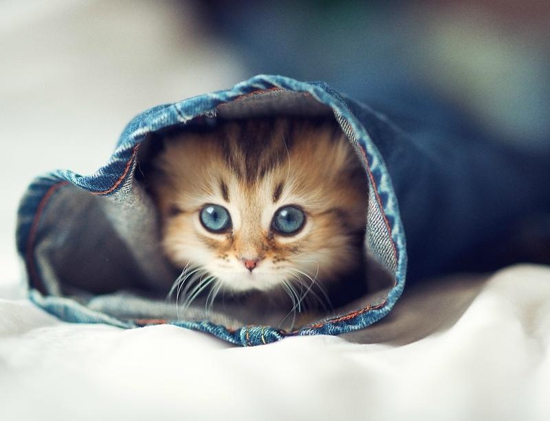 Маленькі кошеня полюбляють всюди лазити, та ось незавжди це безпечно для їхньої життя