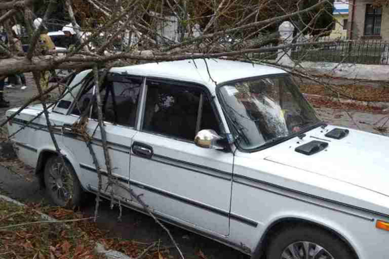 Сухе дерево впало на автомобіль та перегородило проїжджу частину