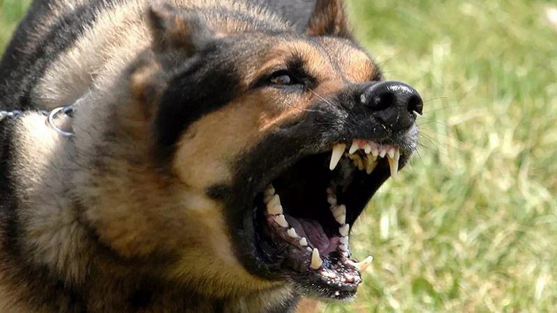 Собака протягом кількох днів покусала двох жінок