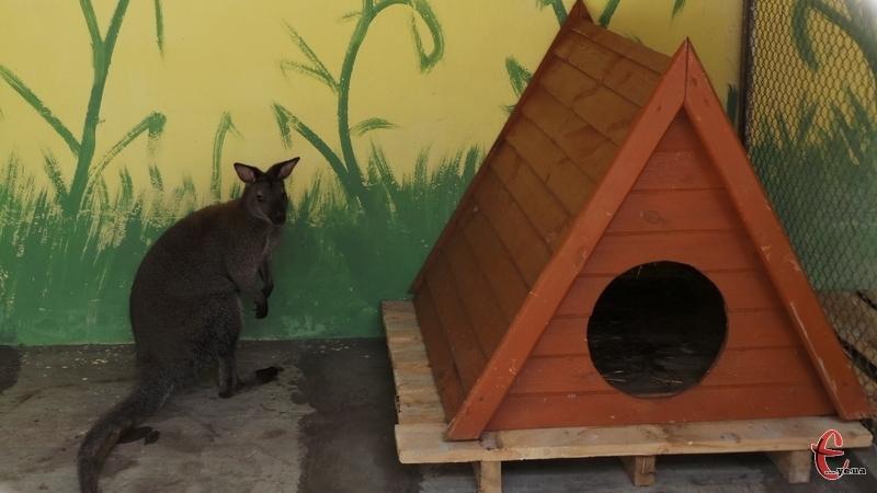 Для кенгуру вже звели хатинку, а для єнота тільки будують