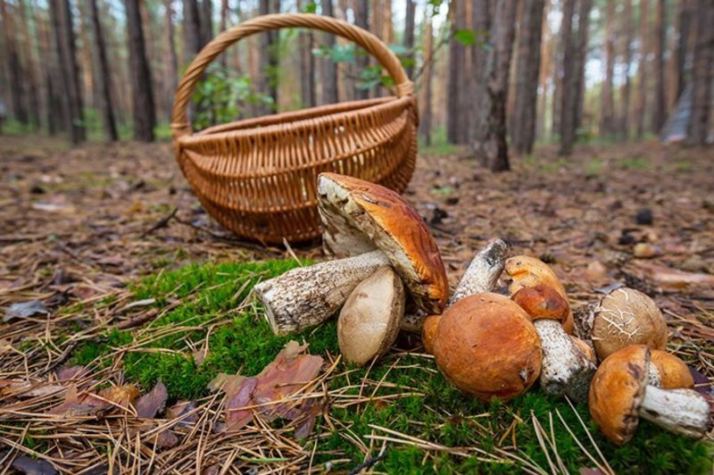 Жінка цілу добу пробула в лісі.
