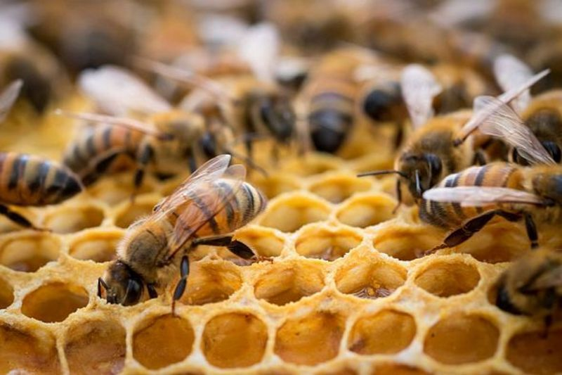 У Кам'янець-Подільському районі загинуло чимало сімей бджіл