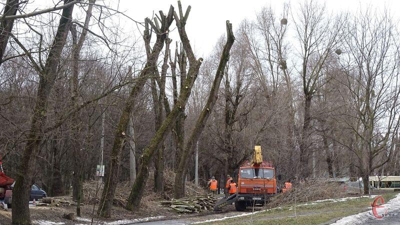 На вулиці Проскурівського підпілля омолоджують дерева